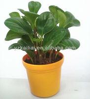 colorful plastic flower pot,feeling garden planter