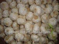 fresh garlic for sale jinxian new garlic