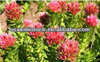 nature rhodiola rosea extract