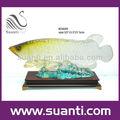 hot venda de peixes de aquário de fotos