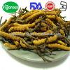 natural Cordyceps sinensis extract/yarsagumba powder /yarsagumba extract for free sample