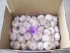 2013 new garlic COLD CARGO
