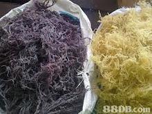 Sabah Dried Seaweed