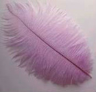 Cleaned Ostrich Feathers