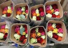 KENYAN spray rose flowers