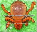 Meilleure qualité de fruits de mer congelés de crabe clé. produit naturel