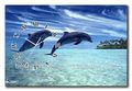 Animaux décoration horloge murale, dauphins horloge décorative, animaux horloge toile photo
