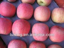 fuji apple 2013