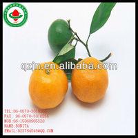 fresh orange producers