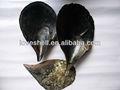 real negro natural pluma concha en bruto de la madre de conchas de perlas