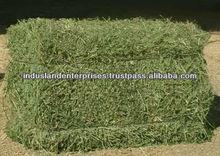 Alfalfa Hay - Single Press