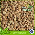 tartary buckwheat kernel semolina