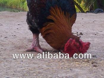 Dong Tao chicken