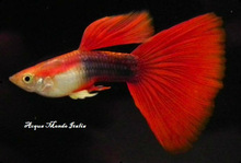 Live tropical fish Marine and freshwater fish