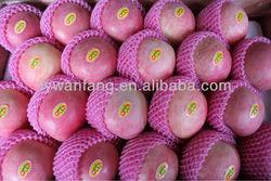 China Shandong Fresh fuji /Huaniu Apple wholesale was very popular in Dubai