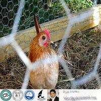 Anping Chicken Wire Factory/hexagonal wire netting/chicken wire mesh