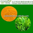 NATURAL TEA POLYPHEOL 20%-98%