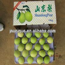 Export hot sell China shandong fresh pear