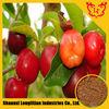 High Quality Acerola Cherry Extract / Vitamin C 17% 25% HPLC, 5:1 10:1