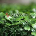 sunwing boa qualidade artificiais hedge de tela privacidade para o jardim