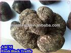 vacuum packed wild truffle 4-8cm