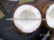 Big Size Coconut
