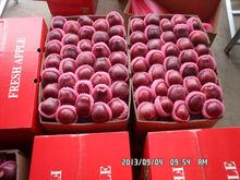 wholesale prices apple