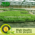 cor verde de plástico solo agrícola para cobrir estufa