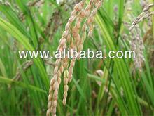 Long Grain Natural Rice
