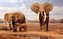 modern elephant family animal oil painting