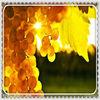 2013 high quality resveratrol organic grape seed extract