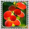 2013 high quality factory supply organic grape seed