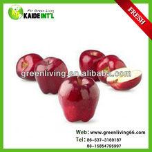 new crop fresh fuji apple hot sale ,China(apple:fuji, huaniu, gala, golden,qingguan, red star)