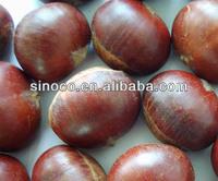 chestnut hair color Fresh Chestnut
