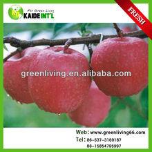 fresh red delicious fuji apple hot sale ,China(apple:fuji, huaniu, gala, golden,qingguan, red star)
