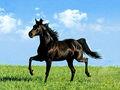 3d impresso imagem foto do cavalo