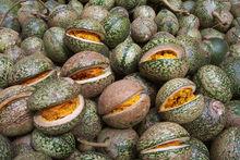 Voacanga seed