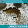 Wholesale minnow fishing lure plastic lure body blank