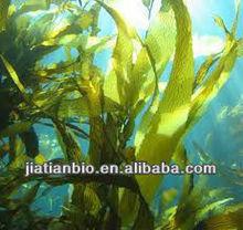 Wakame Extract Bladderwrack Seaweed Kelp Extract