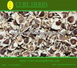 Elite Moringa oleifera tree seeds