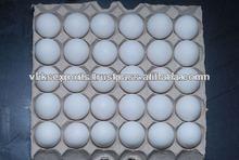chicken table eggs supplier