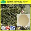 100% Organic Ascophyllum nodosum extract/ascophyllum nodosum fertilizer/Ascophyllum nodosum powder
