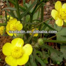 Ranunculus ternatus Thunb.extract/ Radix Ranunculi Ternati P.E/ Macfadyena