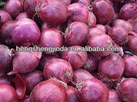 HOT SALE fresh red onion