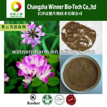 Chinese milk vetch Astragalus sinicus Purple Flower Plant Seeds perennial