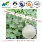 polygonum cuspidatum resveratrol botanical extract