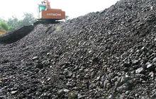 Indonesian Steam Coal GCV 5500/5300--NCV 3800/3600