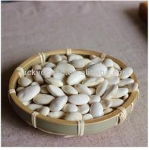 Medium White Kidney Beans