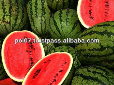 Bulgarian Water Melon