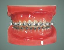 Dental model dental sinulation manikin phantorn training/dental training manikin
